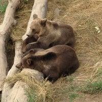 Das Foto wurde bei Bärenpark von Christoph L. am 7/21/2012 aufgenommen