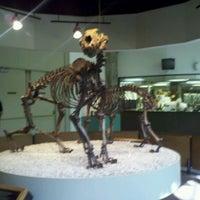 Das Foto wurde bei Page Museum at the La Brea Tar Pits von Elisabeth B. am 10/4/2011 aufgenommen