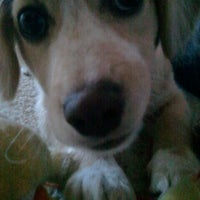 Photo taken at Puppy Playpen by Eric S. on 8/17/2011
