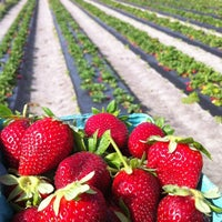 Photo taken at Pappy's Strawberry Patch by Amanda on 3/8/2012