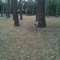 Photo taken at Tamarac Dog Park by Gin, Saydie & Marx J. on 6/2/2011
