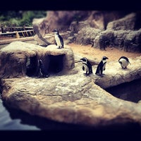 Photo taken at Denver Zoo by Amal A. on 8/20/2012