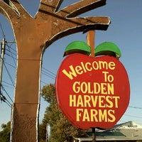 รูปภาพถ่ายที่ Golden Harvest Farms โดย Colleen T. เมื่อ 10/17/2011