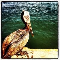 Photo prise au Shelter Island Shoreline Park par Patrick H. le8/2/2012