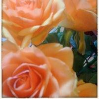 monceau fleurs - fleuriste à ternes