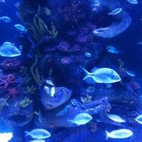 8/26/2012 tarihinde ®üy@ .ziyaretçi tarafından Antalya Aquarium'de çekilen fotoğraf