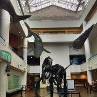 Снимок сделан в San Diego Natural History Museum пользователем Daisuke T. 8/11/2011