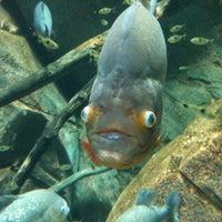 Foto tomada en Southern Company River Scout por Kristy K. el 10/10/2011