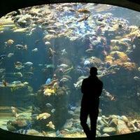 Photo taken at Steinhart Aquarium by Kris V. on 12/14/2011
