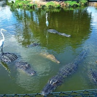Photo taken at Gatorland by David H. on 9/1/2012