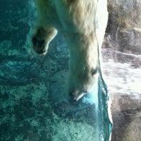 Photo taken at Polar Bear Museum by Aya on 10/11/2011