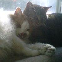 Photo taken at Whitehall Animal Hospital by Kristin R. on 10/13/2011