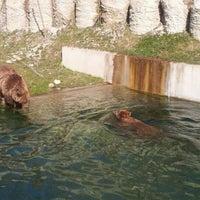 Das Foto wurde bei Bärenpark von Yuri L. am 3/22/2012 aufgenommen