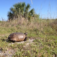 Photo taken at Honeymoon Island State Park by Heather O. on 5/24/2012