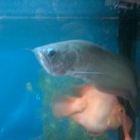 8/17/2012 tarihinde Jonathan C.ziyaretçi tarafından The Palace Seafood & Dim Sum'de çekilen fotoğraf