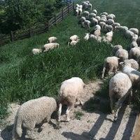 Photo taken at Samyang Ranch by Takarai H. on 6/5/2012