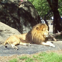Foto scattata a Houston Zoo da Karla B. il 3/23/2012