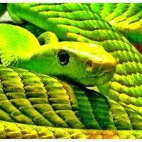 Photo taken at Audubon Zoo by Greg T. on 7/18/2012
