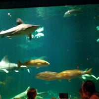 Photo taken at Sharks Underwater Grill by Colleen J. on 8/21/2012