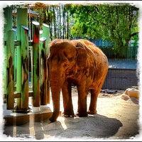 Photo taken at Fresno Chaffee Zoo by Joseph B. on 5/1/2012