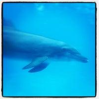 Photo taken at Vallarta Adventures by Jeroen_tje v. on 2/12/2012