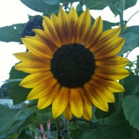 Photo taken at Patterson City Farms Garden by Elise R. on 6/29/2012