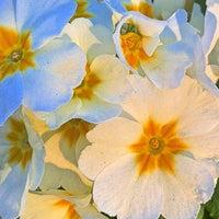 Photo taken at Sunshiny Day by Richard J B W. on 3/31/2012