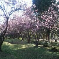 Foto scattata a Parque do Carmo - Olavo Egydio Setúbal da Eloisa E. il 8/8/2012