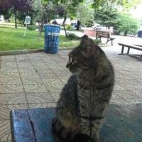 6/15/2012 tarihinde Banu Y.ziyaretçi tarafından Erlangen Parki'de çekilen fotoğraf