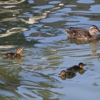 Photo taken at The Duck Pond by Penny N. on 7/29/2012