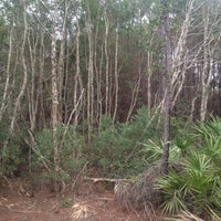 Photo taken at The Theodore Roosevelt Area at Timucuan Preserve by Tim B. on 2/16/2012