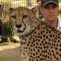 2/20/2012 tarihinde Mario L.ziyaretçi tarafından Cheetah Run'de çekilen fotoğraf