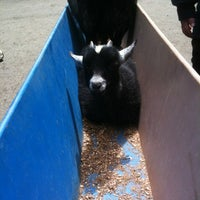Photo taken at Queen's Park Petting Zoo by Scott R. on 6/23/2012