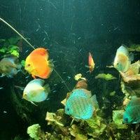Foto scattata a Underwater World da KELVIN L. il 2/21/2012