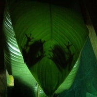Photo taken at Frog Pond of Monteverde by Ricardo F. on 2/26/2012
