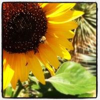 7/26/2012 tarihinde Brandon A.ziyaretçi tarafından Denver Botanic Gardens'de çekilen fotoğraf