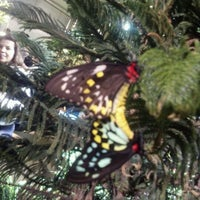 Photo taken at The Butterfly Conservatory at the American Museum of Natural History by Jonathan H. on 4/23/2012