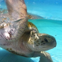 Photo taken at Loggerhead Marinelife Center by Christie C. on 7/4/2012