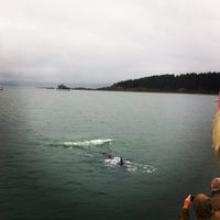 Photo taken at Whale Watching Tour by Melissa S. on 8/13/2012