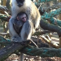 Photo taken at Wingham Wildlife Park by Nicholas F. on 3/7/2012