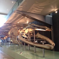 Photo taken at Melbourne Museum by Limokchou N. on 4/10/2012