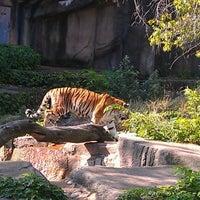 7/12/2012にSithfredo R.がLincoln Park Zooで撮った写真