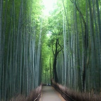 Photo taken at Arashiyama Bamboo Grove by yoshigosousa on 7/13/2012