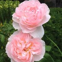 รูปภาพถ่ายที่ Shakespeare Garden โดย Melissa M. เมื่อ 6/2/2012