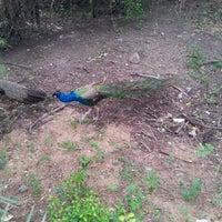 Photo taken at Nehru Zoological Park by Ashraf G. on 9/6/2012