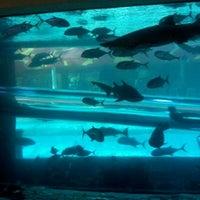 3/4/2012 tarihinde Sandy C.ziyaretçi tarafından Golden Nugget Pool'de çekilen fotoğraf