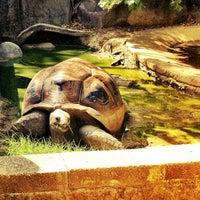 Photo taken at Little Rock Zoo by Daniel H. on 8/14/2012