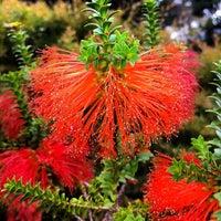 Photo taken at Dunedin Botanic Garden by David O. on 4/15/2012