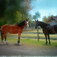 Photo taken at Rose Court Horse Farm by Denise L. on 2/25/2012