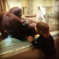 Photo taken at Great Ape House at the National Zoo by Evan C. on 4/27/2012